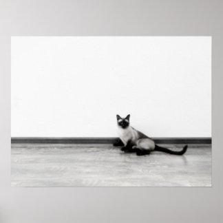 CUTE Siamese Cat Portrait Photograph Poster