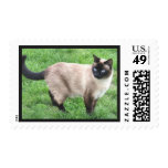 Cute Siamese Cat Postage Stamp