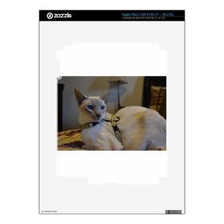 Cute Siamese Kitten Skins For iPad 3