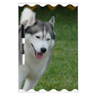Cute Siberian Husky Dry-Erase Board