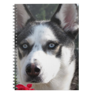 Cute Siberian Husky Notebooks