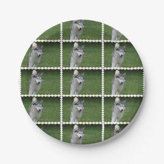 Cute Siberian Husky Paper Plate