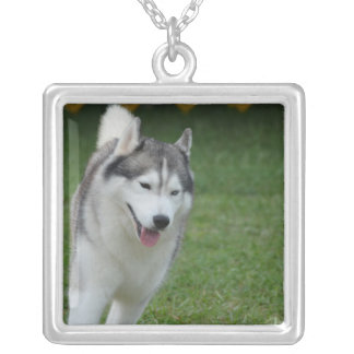 Cute Siberian Husky Silver Plated Necklace
