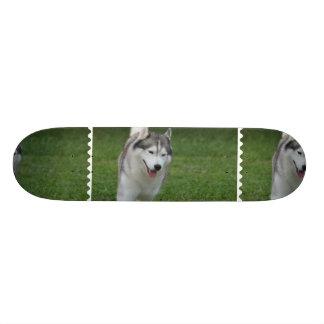 Cute Siberian Husky Skateboard Deck