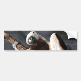 Cute Sifaka Lemur Bumper Sticker
