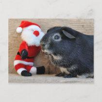 Cute Silver Fox Guinea Pig and Santa Holiday Postcard
