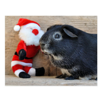 Cute Silver Fox Guinea Pig and Santa Postcard