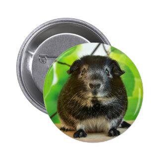 Cute Silver Fox Guinea Pig Pinback Button