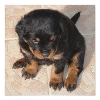 Cute Sitting Rottweiler Puppy Card