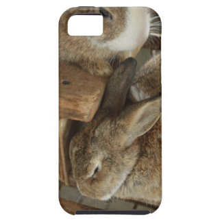Cute Sleeing Rabbit iPhone SE/5/5s Case