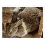 Cute Sleeing Rabbit Post Card