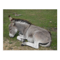 Cute sleeping baby donkey foal postcard
