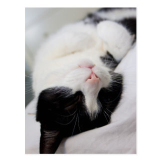 Cute sleeping cat tomcat face sleep postcard