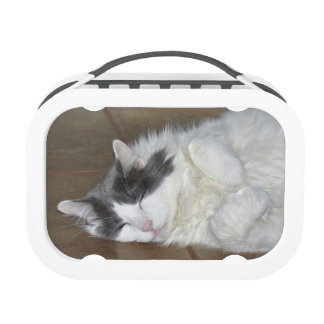 Cute sleeping Cats Lunch Box
