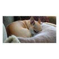 Cute Sleeping Chihuahua Puppy Card