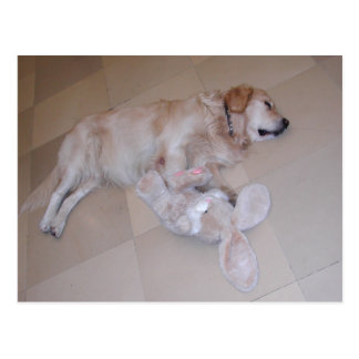 Cute Sleeping Golden Retriever  With Toy Rabbit Postcard