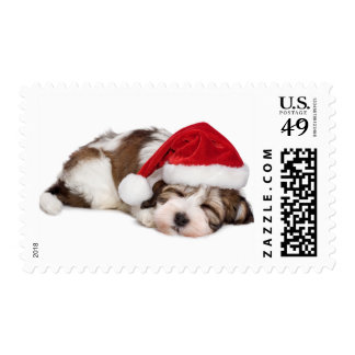 Cute Sleeping Havanese Puppy Dog Is Dreaming Postage