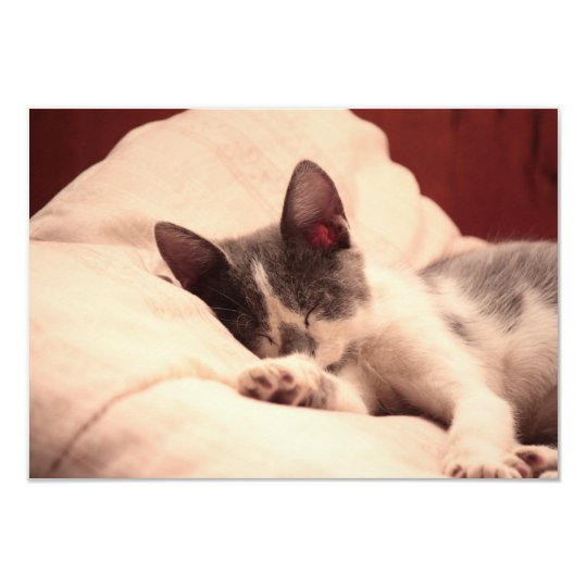 Cute Sleeping Kitten Card