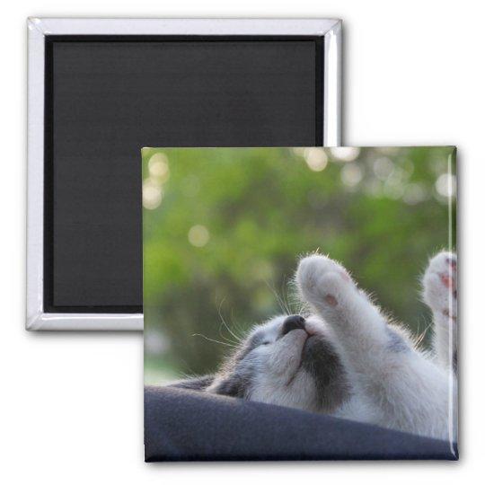 Cute Sleeping Kitten Magnet