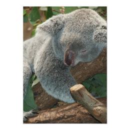 Cute Sleeping Koala Bear Card