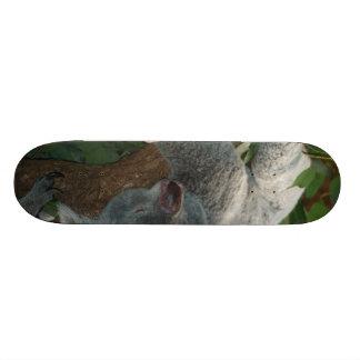 Cute Sleeping Koala Bear Skate Board Decks