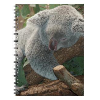 cute sleeping koala note book
