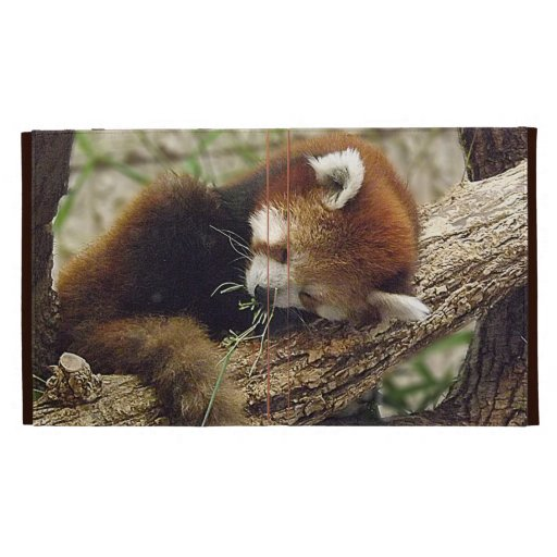 Cute Sleeping Red Panda w/ Food in Its Mouth iPad Cases