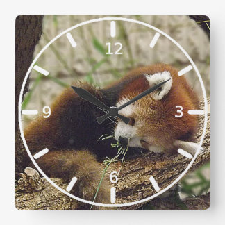 Cute Sleeping Red Panda w Food in Its Mouth Square Wallclocks