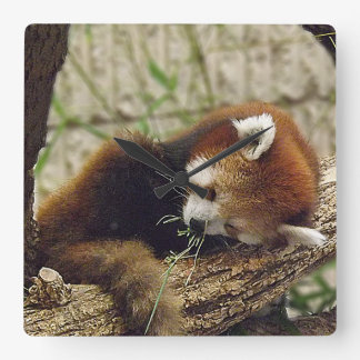 Cute Sleeping Red Panda w Food in Its Mouth Clock