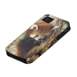 Cute Sleeping Red Panda w/ Food in Its Mouth iPhone 4/4S Case
