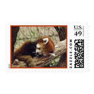 Cute Sleeping Red Panda w/ Food in It's Mouth Postage Stamp