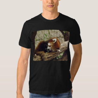 Cute Sleeping Red Panda w/ Food in It's Mouth Shirt