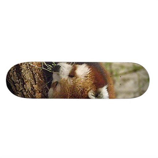 Cute Sleeping Red Panda w/ Food in Its Mouth Custom Skate Board