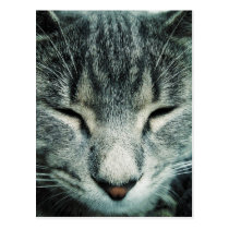 Cute sleeping tabby kitten postcard