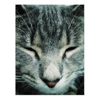 Cute sleeping tabby kitten postcard