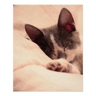 Cute Sleepy Cat Kitten Pet Peace Love Destiny Poster