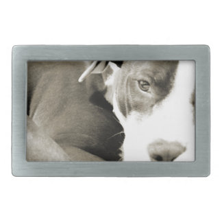 cute sleepy lazy pit bull dog belt buckle