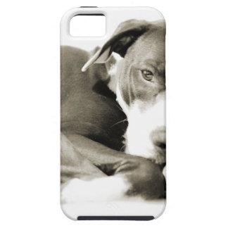 cute sleepy lazy pit bull dog iPhone SE/5/5s case