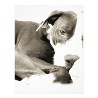 cute sleepy lazy pit bull dog letterhead