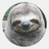 Cute Sloth Face