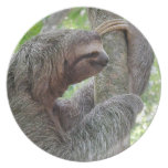 Cute Sloth Party Plate