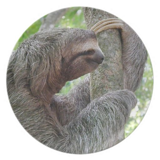 Cute Sloth Party Plates