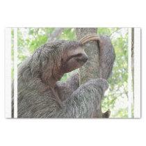 Cute Sloth Tissue Paper