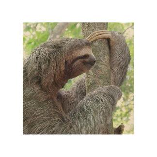 Cute Sloth Wood Prints