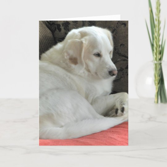 Cute Small White Dog Portrait Card Zazzle Com