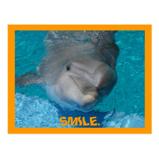 Cute smiling dolphin postcard