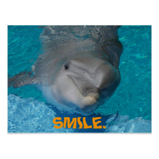 Cute smiling dolphin poster