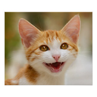 Cute smiling kitten funny cat meow poster