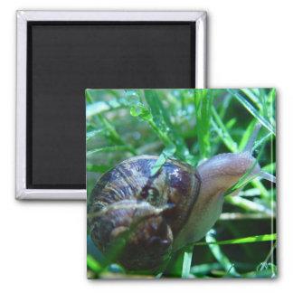 Cute Snail In Wet Green Grass Refrigerator Magnet