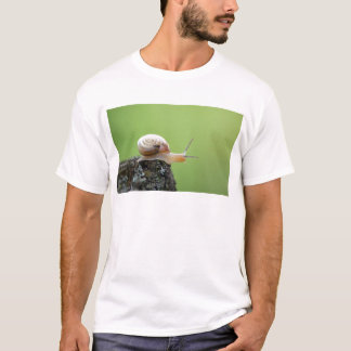 Cute Snail on Edge With Green Background T-Shirt